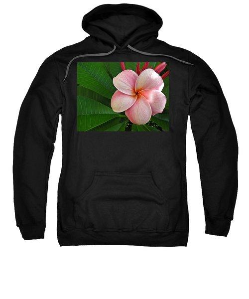 Pink Plumeria Sweatshirt