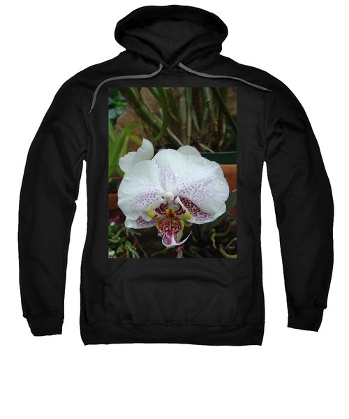 Rain Drops On Orchid Sweatshirt