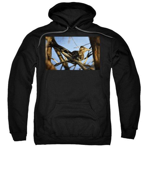 Roadrunner Up A Tree Sweatshirt by Saija  Lehtonen