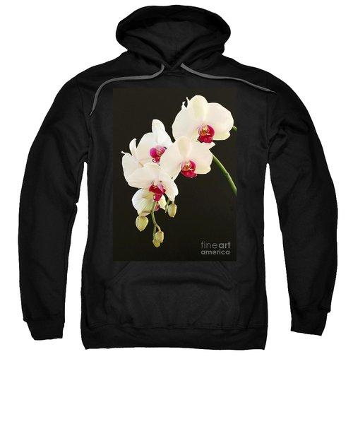 Spray Of White Orchids Sweatshirt