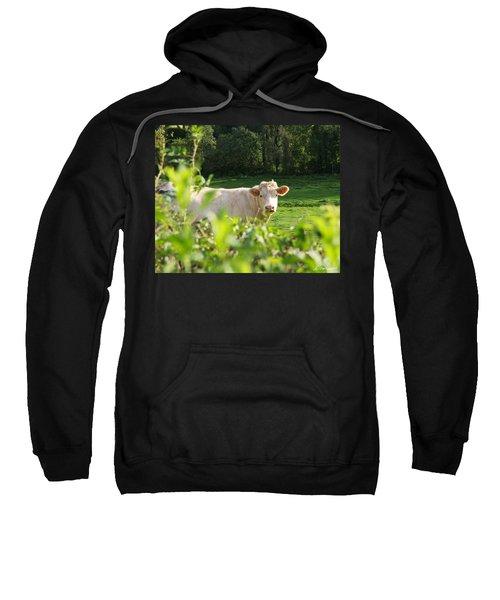 White Cow Sweatshirt