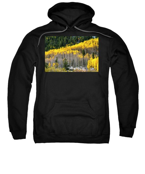 Aspen Trees In Fall Color Sweatshirt