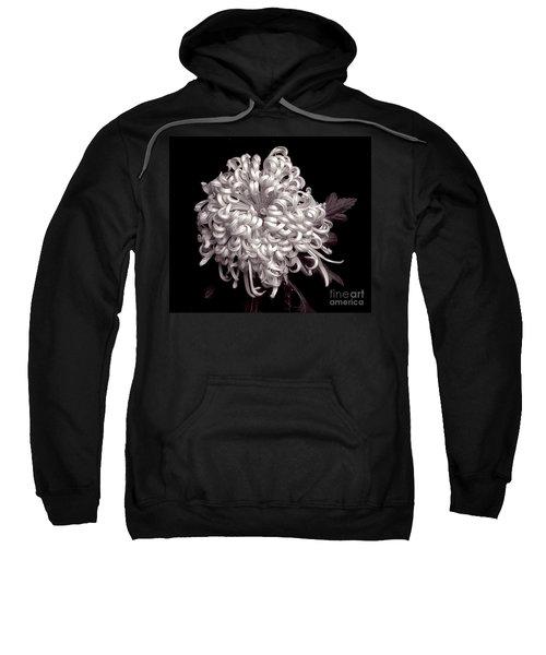 Chrysanthenmum 'satin Ribbon' Sweatshirt