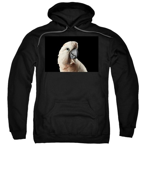 Closeup Head Of Beautiful Moluccan Cockatoo, Pink Salmon-crested Parrot Isolated On Black Background Sweatshirt