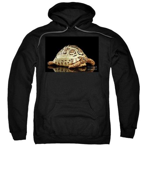 Closeup Leopard Tortoise Albino,stigmochelys Pardalis Turtle With White Shell On Isolated Black Back Sweatshirt