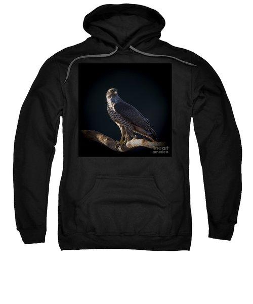 Hawk-eye Sweatshirt