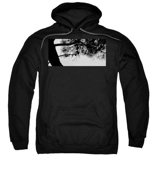 Pine Cone Branch Sweatshirt