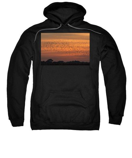 Sunset Starlings  Sweatshirt