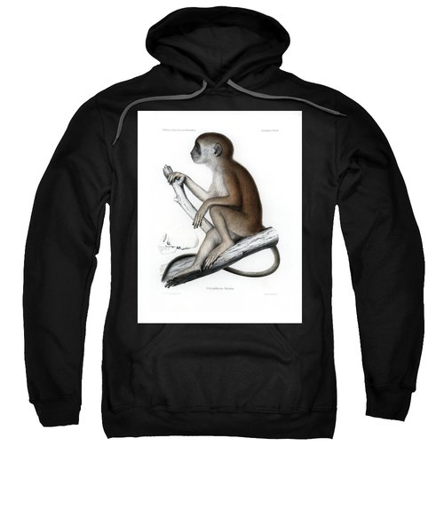 Sweatshirt featuring the drawing Yellow Baboon, Papio Cynocephalus by J D L Franz Wagner