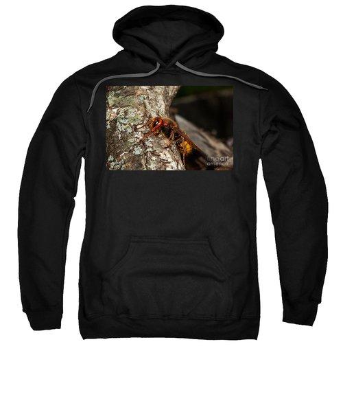 Hornet Vespa Crabo Sweatshirt