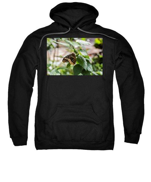 Owl Butterfly Sweatshirt