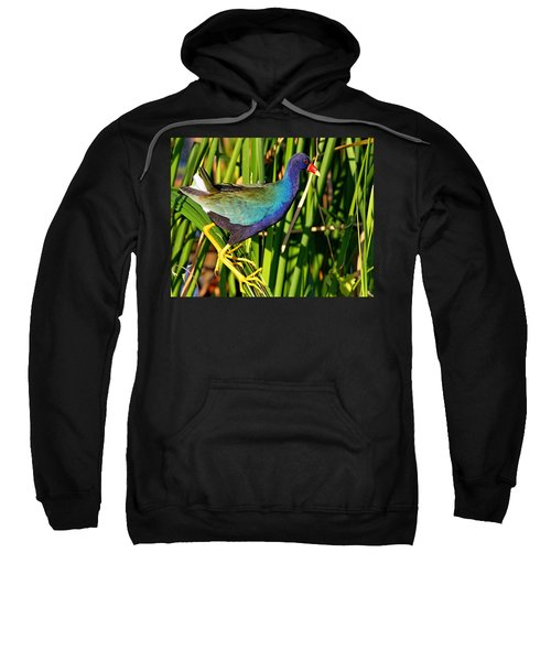 Purple Gallinule Sweatshirt