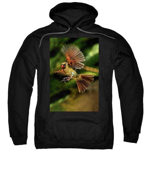 A Cardinal Approaches Sweatshirt