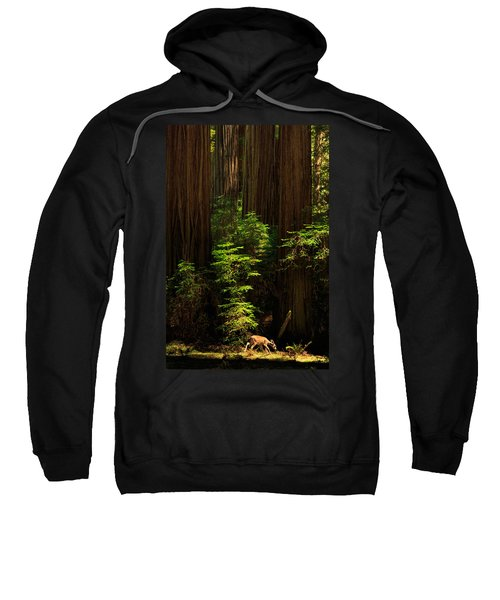 A Deer In The Redwoods Sweatshirt