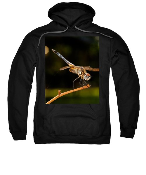 A Dragonfly Sweatshirt