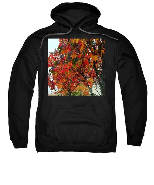 A Riot Of Color Sweet Gum Trees Sweatshirt