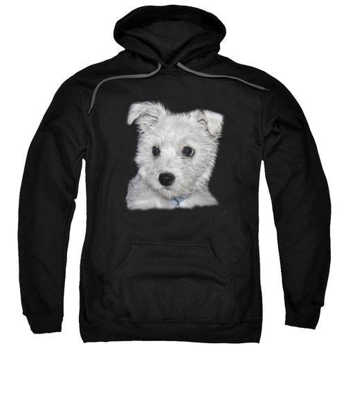 Alert Puppy On A Transparent Background Sweatshirt