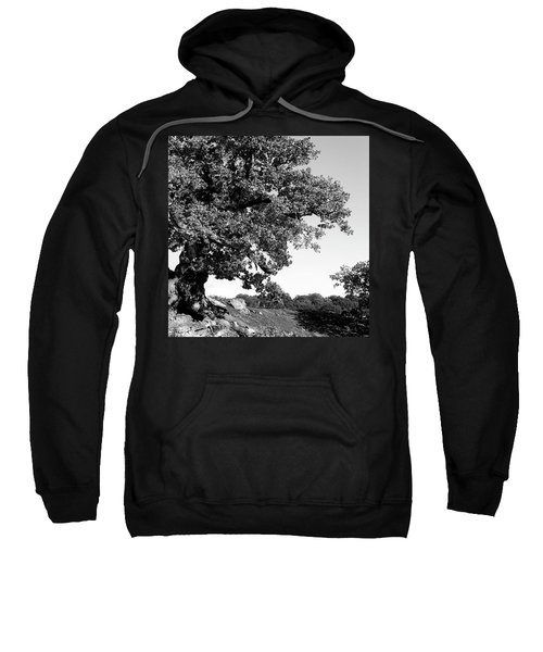 Ancient Oak, Bradgate Park Sweatshirt