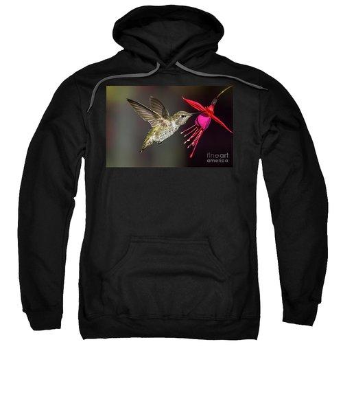 Anna Immature Hummingbird Sweatshirt