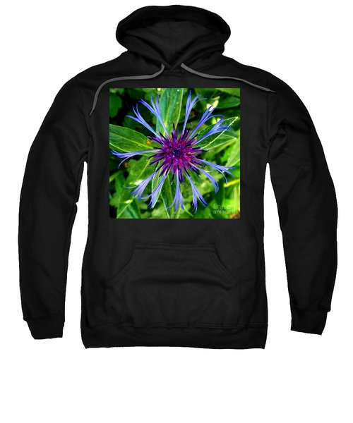 Bachelor Button Blossom Sweatshirt