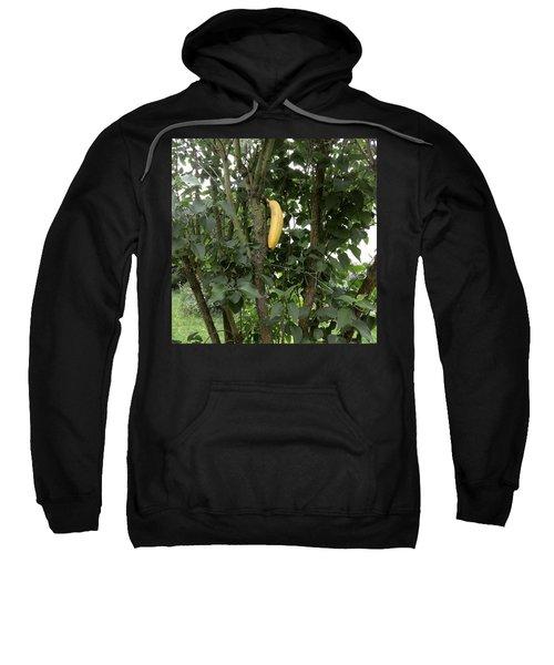 Banana Tree  Sweatshirt