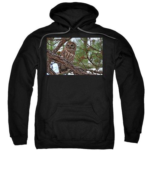 Barred Owl Perched In Tree Sweatshirt