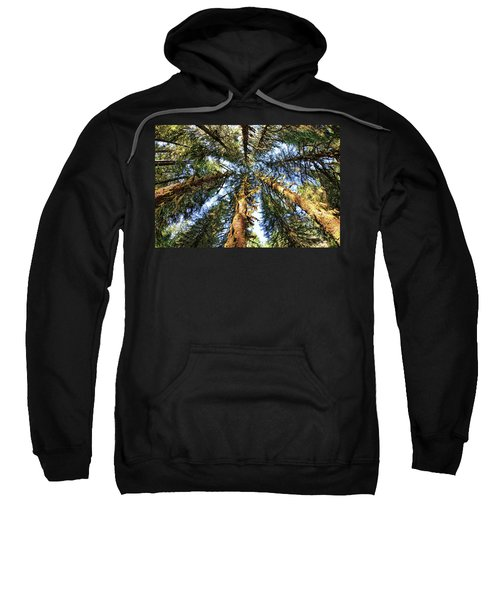 Big Trees In Olympic National Park Sweatshirt