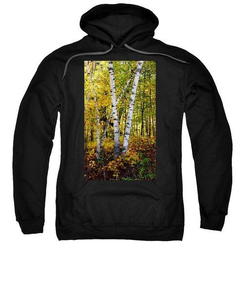 Birch In Gold Sweatshirt