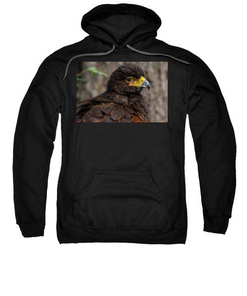 Bird Of Prey Sweatshirt