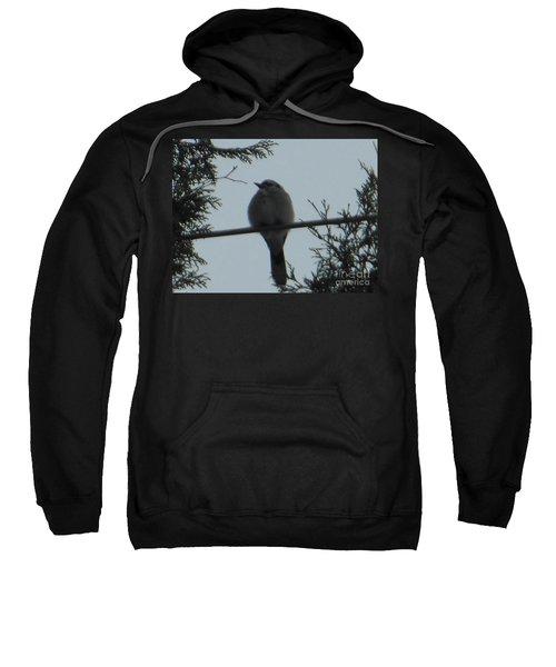 Blue Jay On Wire Sweatshirt