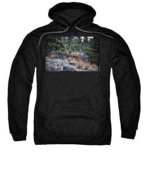 Bobcat Ridge Mule Deer Sweatshirt