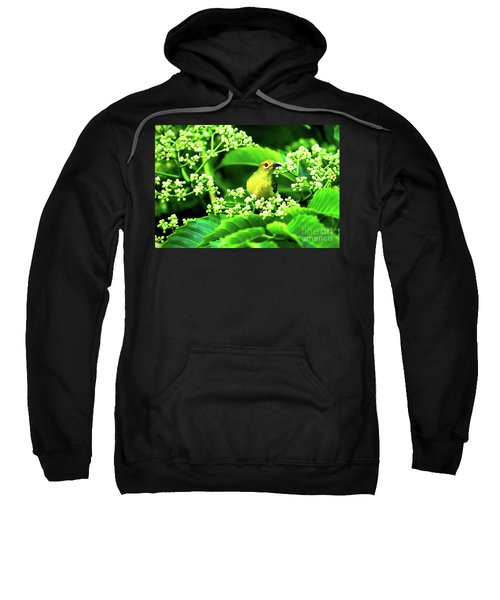 Brown Neck Sunbird Sweatshirt