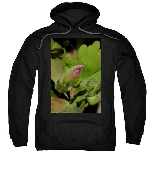 Bud And Spider Silk Sweatshirt