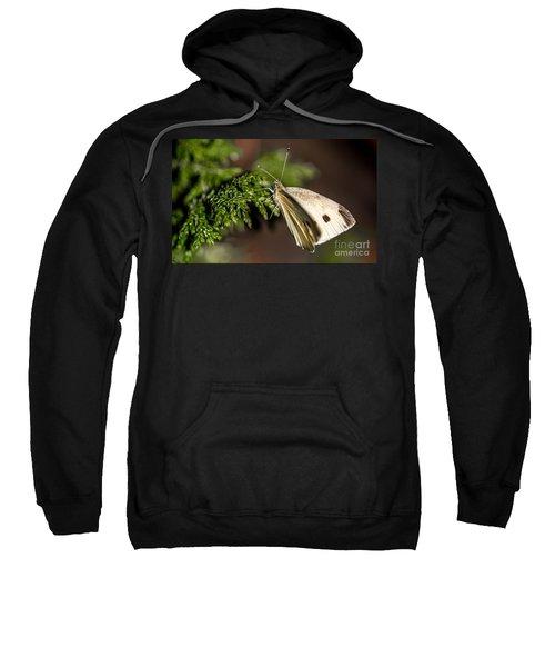 Cabbage Butterfly On Evergreen Bush Sweatshirt