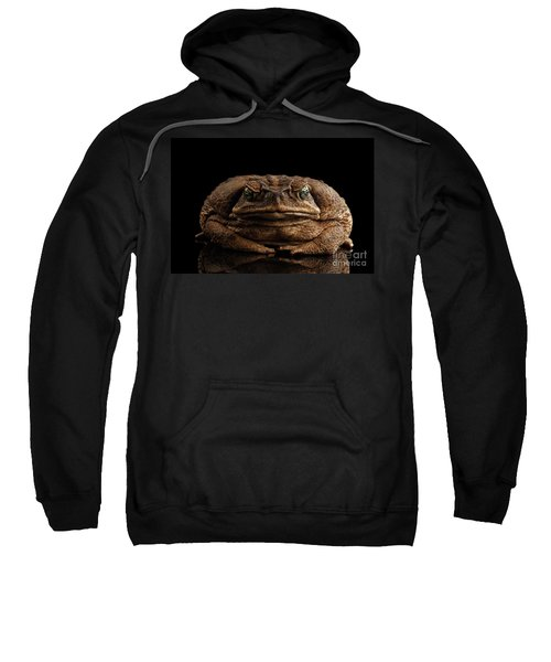Cane Toad - Bufo Marinus, Giant Neotropical Or Marine Toad Isolated On Black Background, Front View Sweatshirt