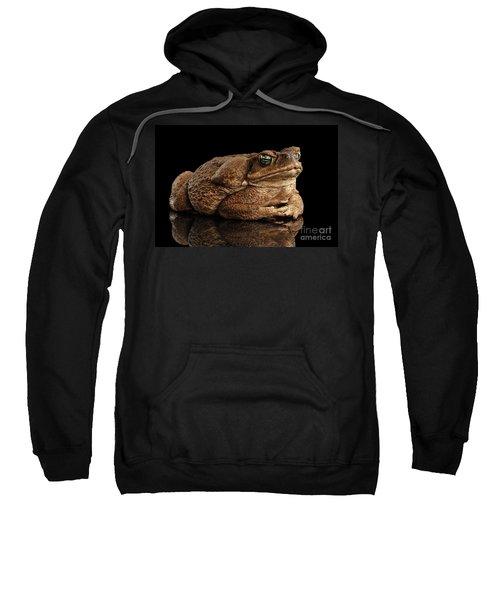 Cane Toad - Bufo Marinus, Giant Neotropical Or Marine Toad Isolated On Black Background Sweatshirt