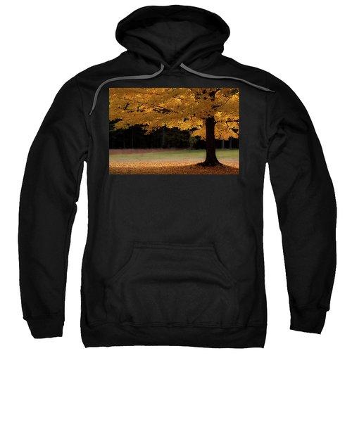 Canopy Of Autumn Gold Sweatshirt