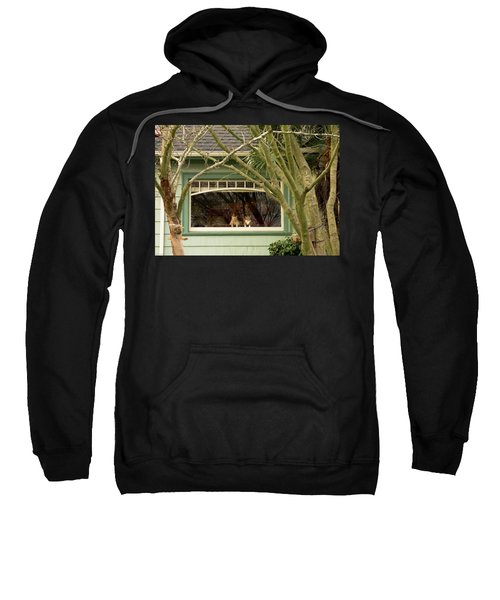 Cat Pals Waiting Sweatshirt