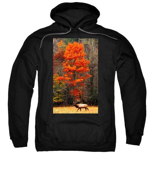 Cataloochee Color Sweatshirt