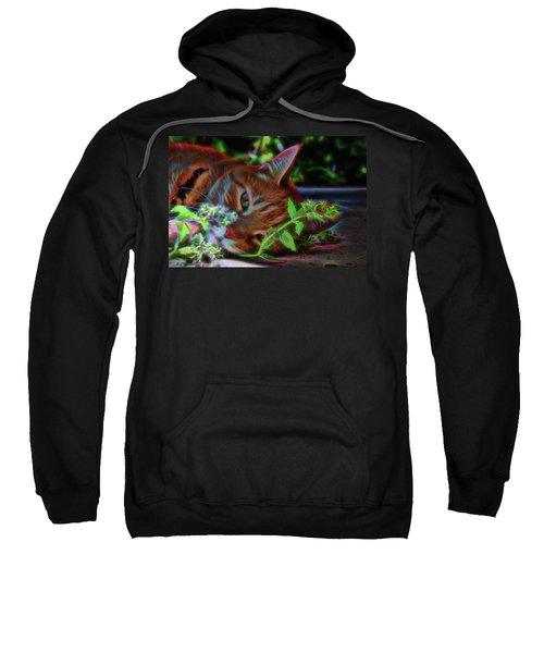 Catnip Chillin Sweatshirt