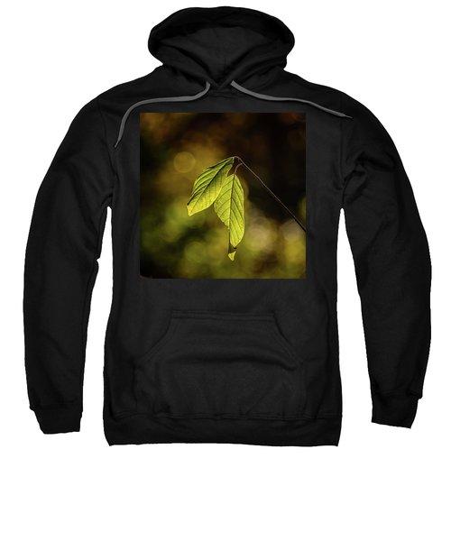 Caught In The Light Sweatshirt