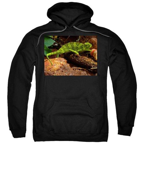 Chameleon Struts His Stuff Sweatshirt by Exploramum Exploramum