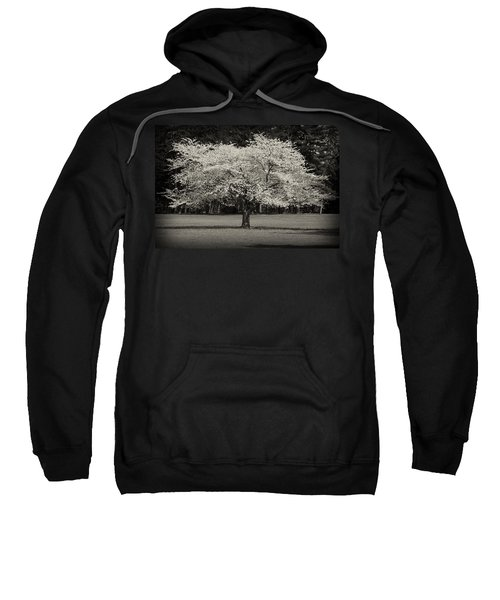 Cherry Blossom Tree - Ocean County Park Sweatshirt