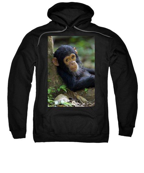 Chimpanzee Pan Troglodytes Baby Leaning Sweatshirt