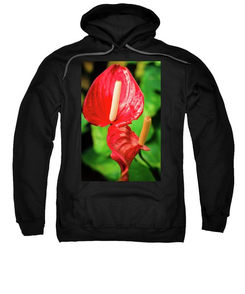 City Garden Flowers Sweatshirt
