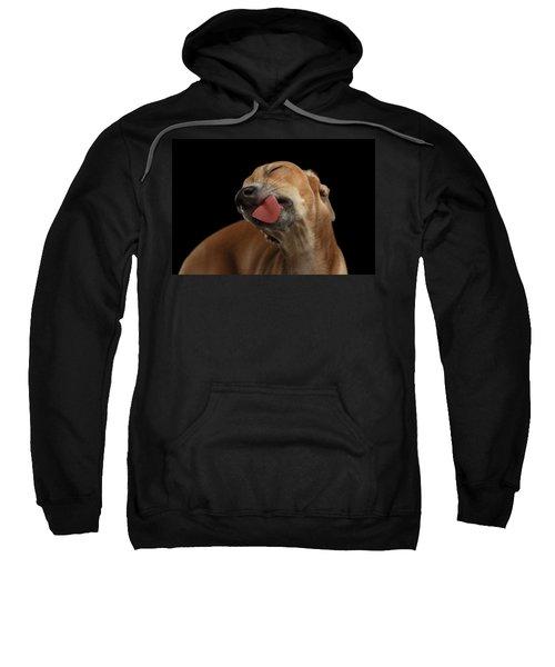 Closeup Cute Italian Greyhound Dog Licked With Pleasure Isolated Black Sweatshirt