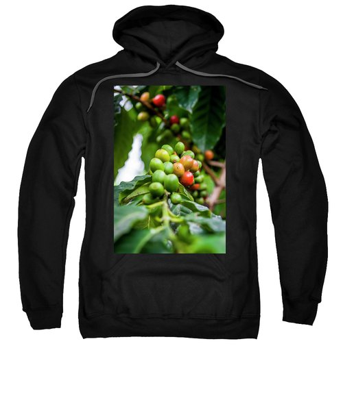 Coffee Plant Sweatshirt