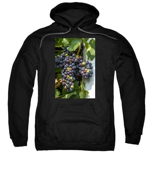 Colorful Wine Grapes On Grapevine Sweatshirt