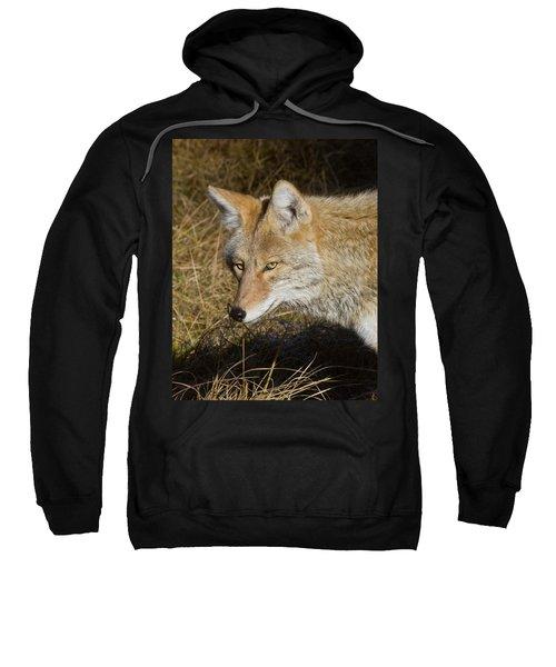 Coyote In The Wild Sweatshirt