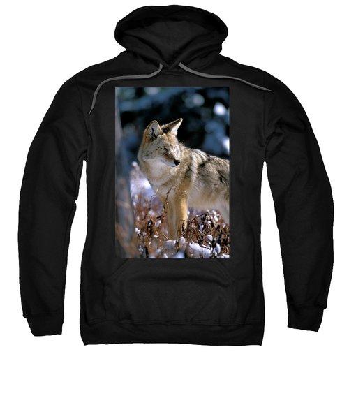 Coyote In Winter Light Sweatshirt
